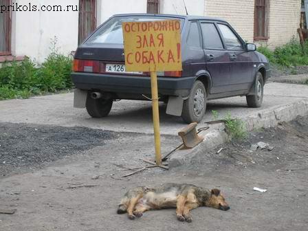 Нажмите на изображение для увеличения Название: 1215761472_prikols_com_ru_2001054.jpg Просмотров: 597 Размер:42.4 Кб ID:7203
