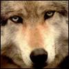 Аватар для abdyla_