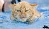 Аватар для Злой Кот